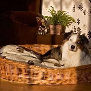 Hundekorb kaufen Platz 1